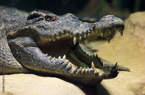 Carta da parati Siamese freshwater crocodile smiling