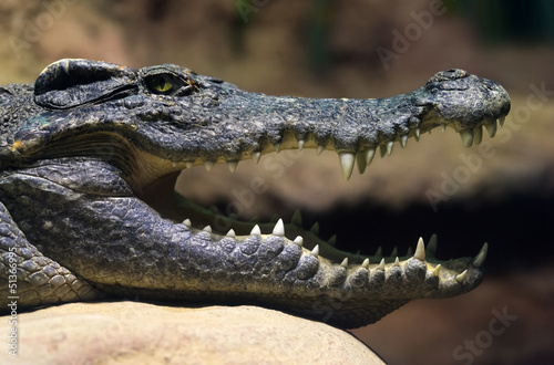 Papiers peints Crocodile Siamese freshwater crocodile smiling