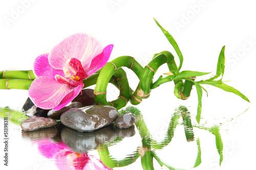Still life with green bamboo plant, orchid and stones,