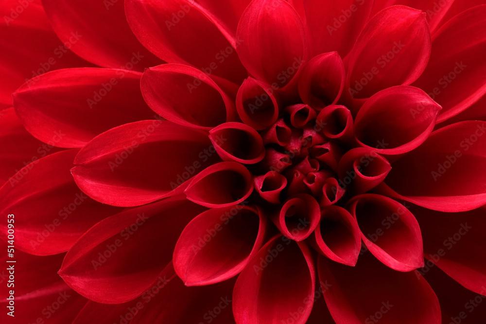 Fototapeta Close up of red dahlia flower