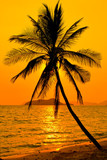 Tropikalny zachód słońca - 51401953