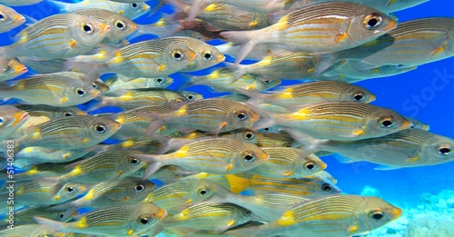 School of fish #51406383