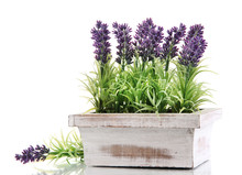 Beautiful Lavender In Wooden P...
