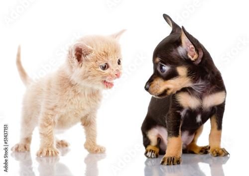 kotek-zneca-sie-nad-szczeniakiem-na-bialym-tle