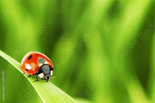 ladybug on grass Wallpaper Mural