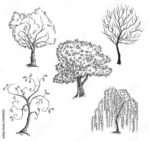 Cuadros en Lienzo Vector trees collection