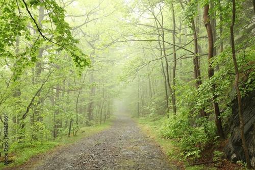 Foto auf Acrylglas Wald im Nebel Forest trail surrounded by fresh spring vegetation