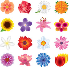 Colorful Flowers Photo-realistic Vector Set