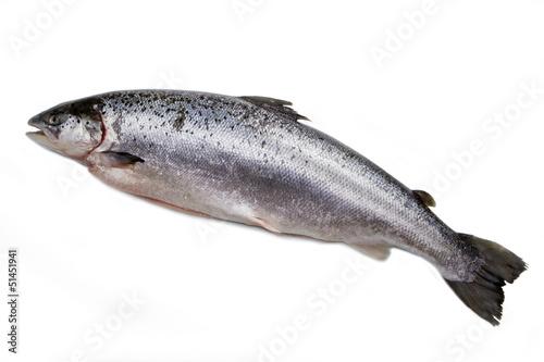 Valokuva  salmone norvegese isolato su sfondo bianco
