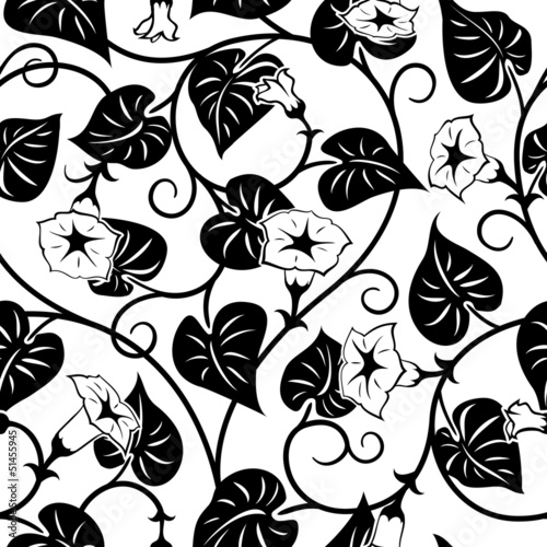 Poster Floral black and white seamless morning-glory black isolated background