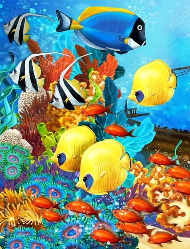 rafa-koralowa-ilustracja-dla