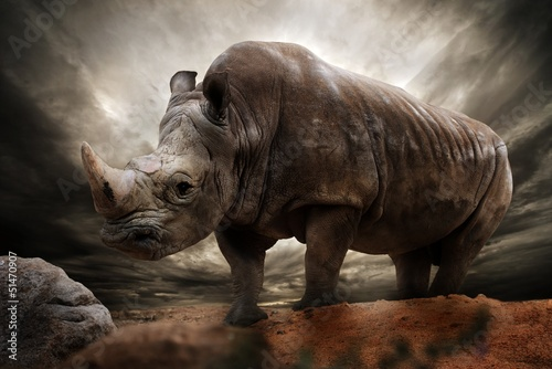 Spoed Foto op Canvas Neushoorn Huge rhinoceros against stormy sky