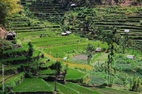 In de dag Lime groen Rizières - Bali