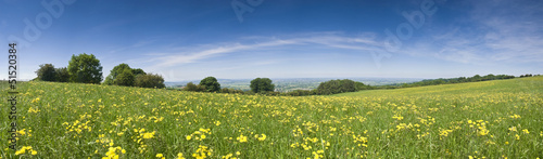 Buttercup field, rural landscape.