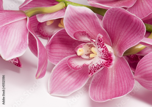 oddzial-rozowa-orchidea