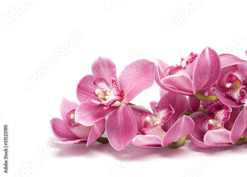 Fototapety, obrazy: A branch of pink orchid