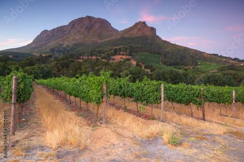 Foto op Plexiglas Zandwoestijn Stellenbosch, the heart of the wine growing region in South Afri