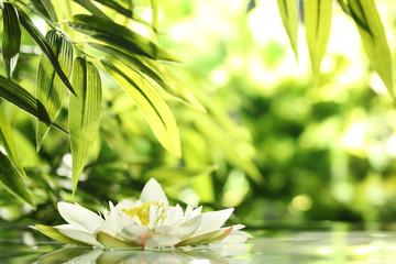 Panel Szklany Podświetlanewater lily