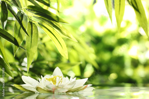 Photo Stands Water lilies water lily