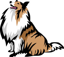 Sitting Collie