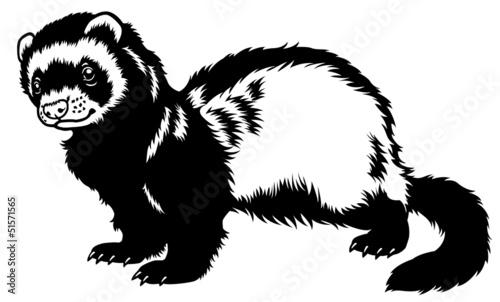 Fotografija  ferret black white