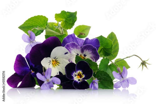 Keuken foto achterwand Pansies pansies and violets