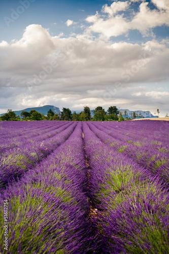 Tuinposter Lavendel Campi di Lavanda a Valensole Provenza, Francia