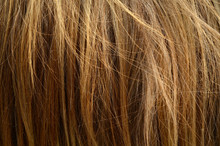 Abstract Background Texture Of Messy Coarse Animal Hair