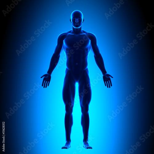 Láminas  Anatomy Body - Front View - Blue concept