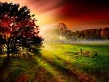 Sylwetka drzewa przed kolorowe promienie słońca wschodzącego słońca - 51646727