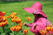 Little Girl Smell Tulip Flower...