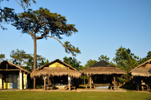 Hut In Pine Forest At Phu Krad...