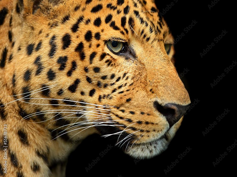 Foto-Schiebevorhang (ohne Schiene) - Portrait of leopard