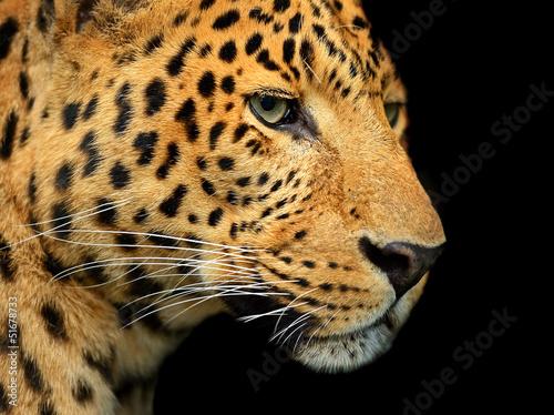 Foto-Schiebevorhang (ohne Schiene) - Portrait of leopard (von kyslynskyy)