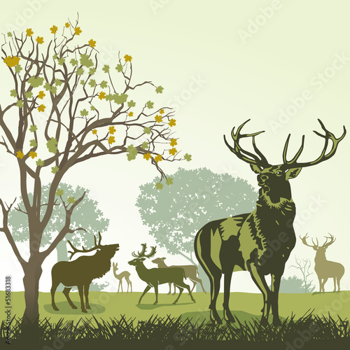 jelenie-i-jelenie-jesienia