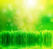 Leinwandbild Motiv Green nature background with fresh grass and water