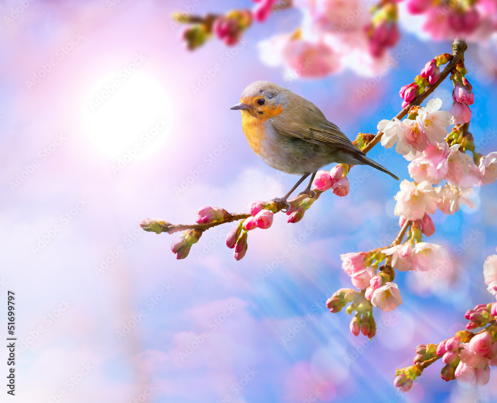 Fototapeta abstract Spring border background with pink blossom