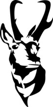 Head Of Pronghorn Antelope