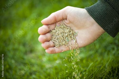Fotografie, Obraz  Hand planting grass seeds