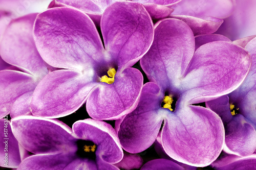 Spoed Foto op Canvas Macro Beautiful Bunch of Lilac close-up.