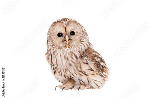 Staande foto Uil Ural Owl (Strix uralensis), isolated on white