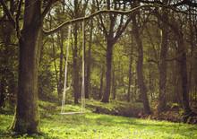 Romantic Scene Of A Swing Hang...