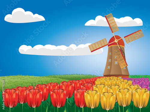 Windmill and tulips - 51778288