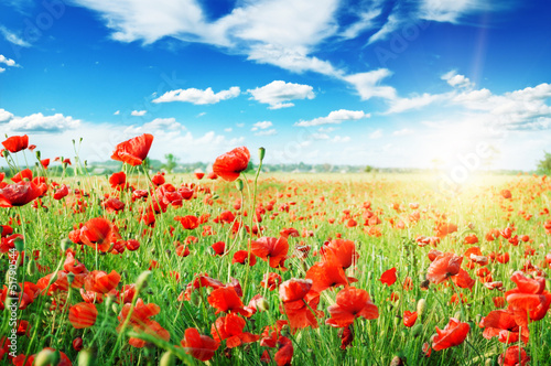 Spoed Foto op Canvas Poppy poppies field in rays sun