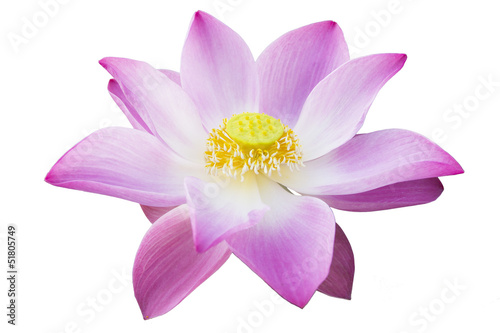 Staande foto Lotusbloem lotus isolated with the white background