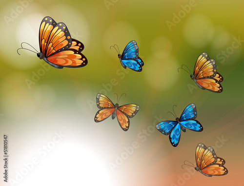 Fotobehang Vlinders A special paper with orange and blue butterflies