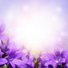 Campanula Spring Flowers Desig...