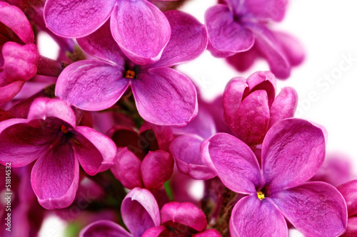 Keuken foto achterwand Macro Beautiful Bunch of Lilac close-up