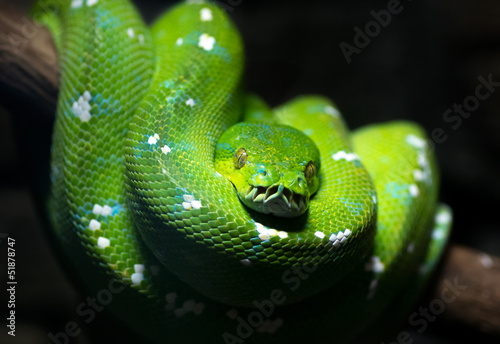 Fotografía  Green snake