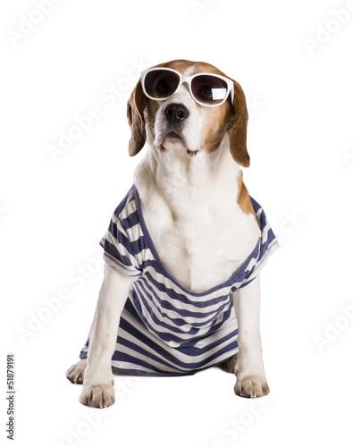 Fototapeta Dog in studio obraz na płótnie